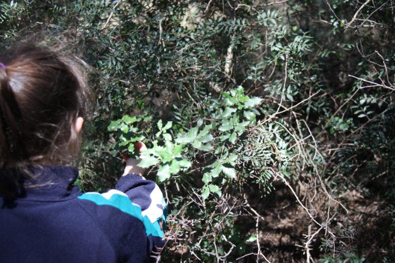 Investiguem el bosc_3