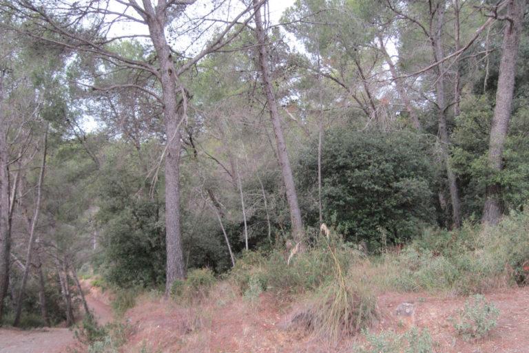 Que passa nostres boscos_1