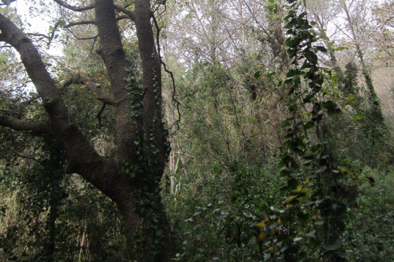 Que passa nostres boscos_3