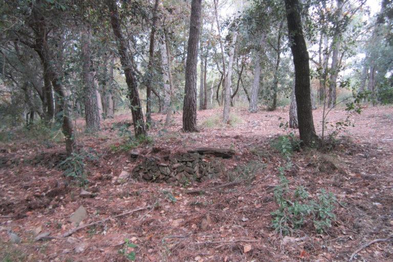 Que passa nostres boscos_7