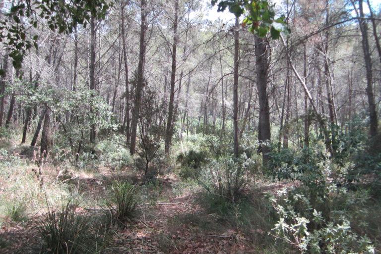 Que passa nostres boscos_PRINCIPAL